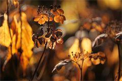 Herbstlicht ...