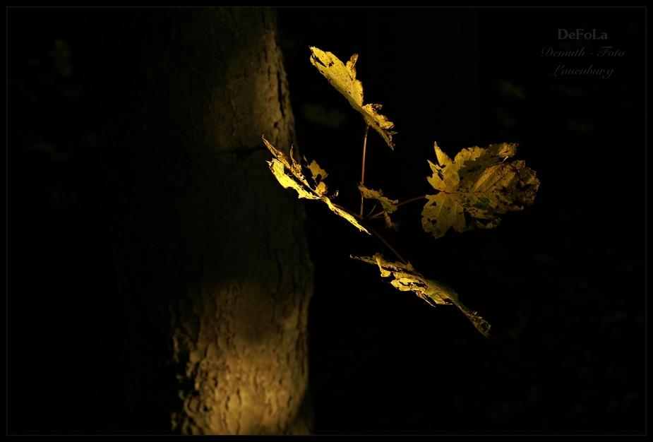 Herbstlicht (8)