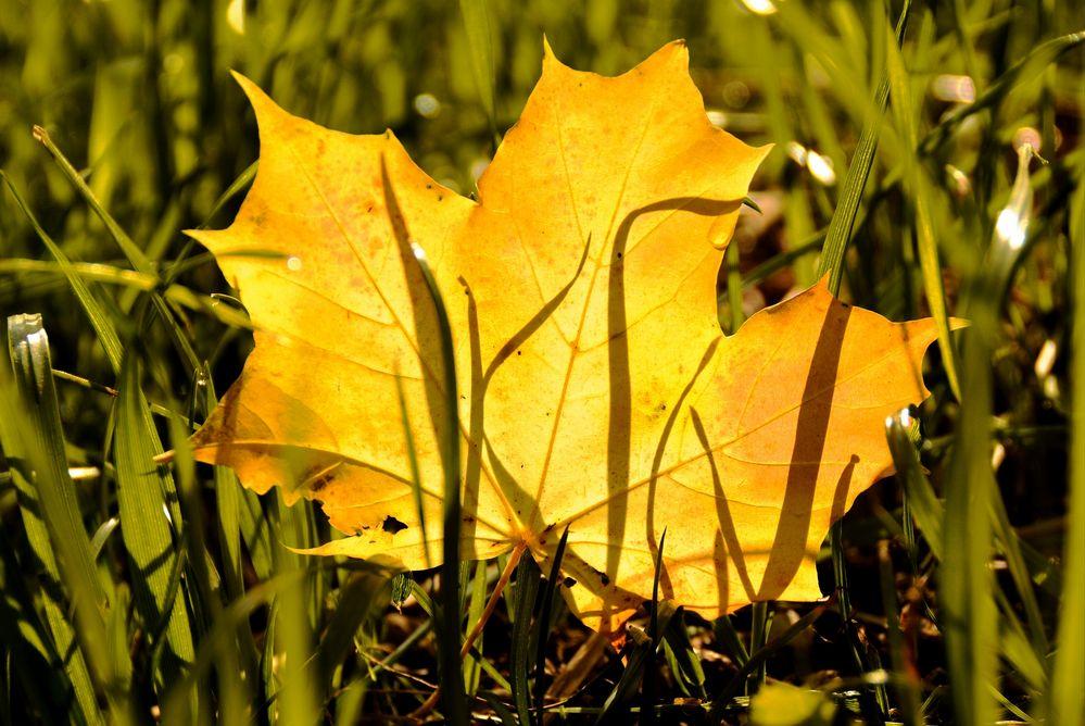 Herbstlich(t)