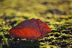Herbstlich.t