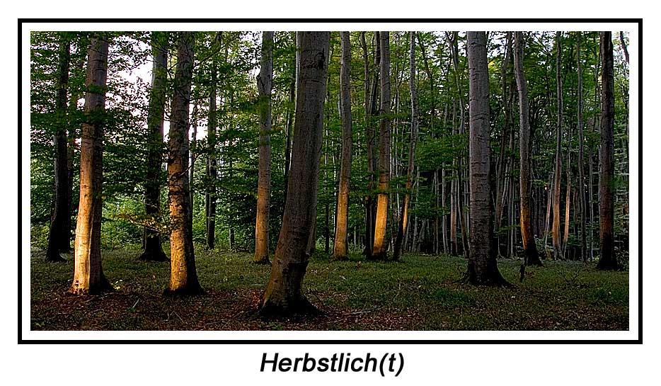 Herbstlich(t) II