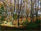Herbstlicht im Herbstwald