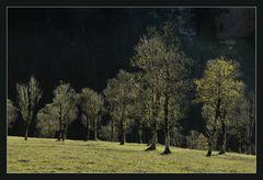 Herbstlicht im Karwendel