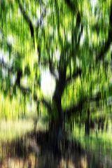 Herbstlicht KDL # 0588 Kopie