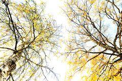 Herbstlicht #KDL0612
