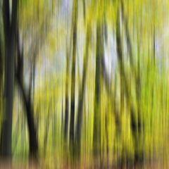 Herbstlicht # KDL0628