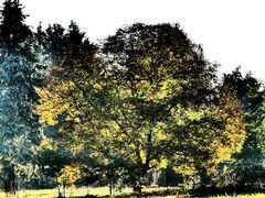 Herbstlicht # P1090610