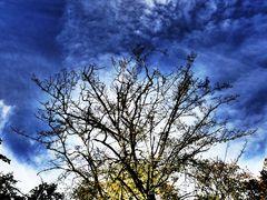 Herbstlicht #P1090743