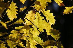 Herbstlicht über´m Blätterdach