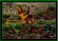 HerbstlTristesse1a