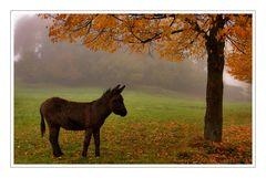 Herbstmärchen