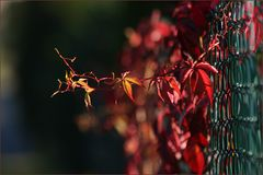 Herbstmaler