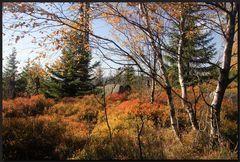 ...HerbstMalereien...