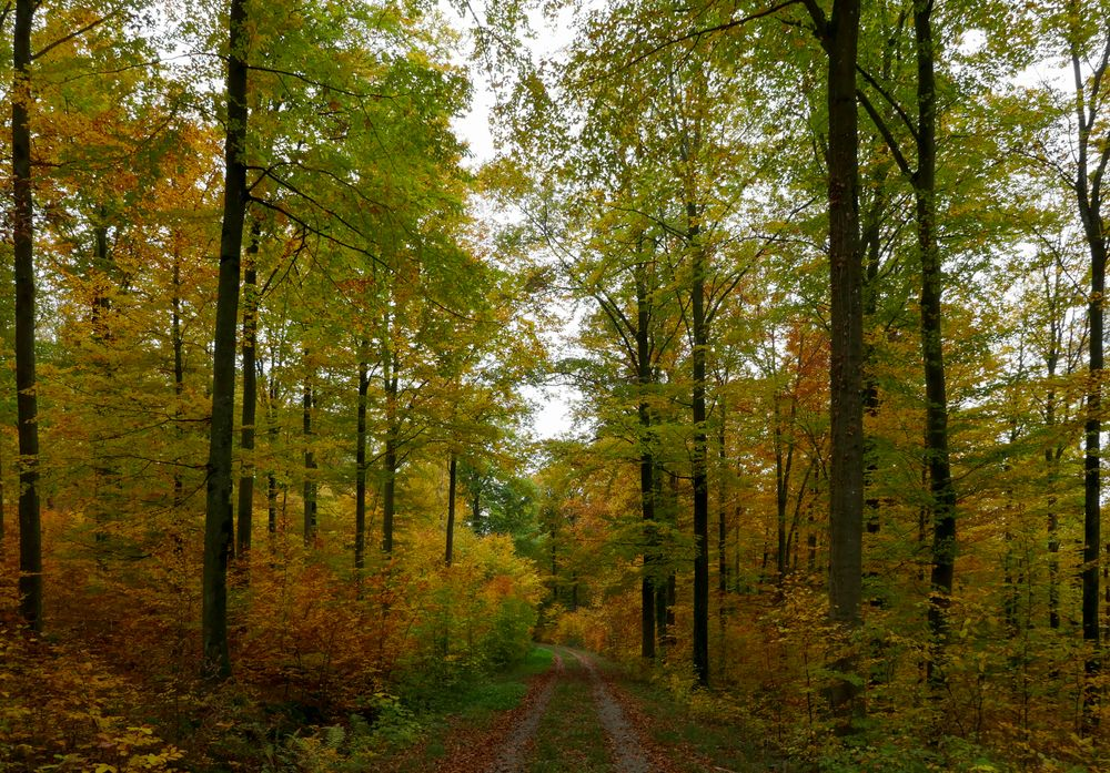 Herbstmania