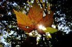 Herbstmaske