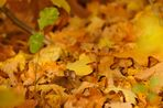 Herbstmaus