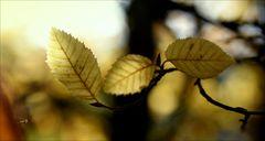 _ HerbstMelodie _