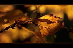 Herbstmomente 2011 2