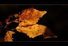Herbstmomente 2011