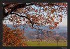 Herbstmomente 47