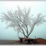 Herbstmorgen #01 Kopie