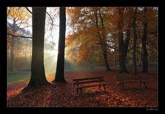Herbstmorgen - 1