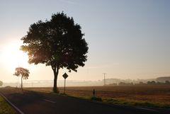 Herbstmorgen (1)