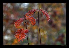 Herbstmorgen - 10