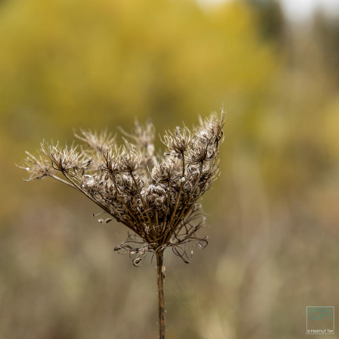 Herbstmorgen 2