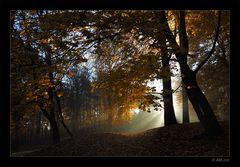 Herbstmorgen - 2