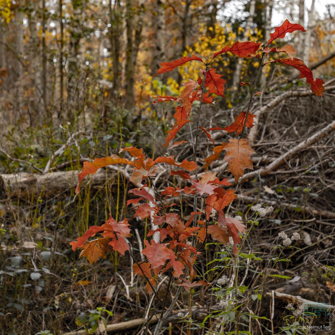 Herbstmorgen 3