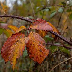 Herbstmorgen 4