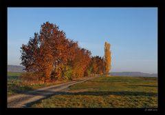 Herbstmorgen - 6