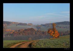 Herbstmorgen - 9