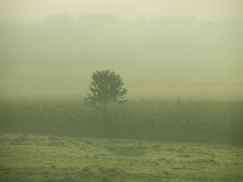 Herbstmorgen an der Mosel