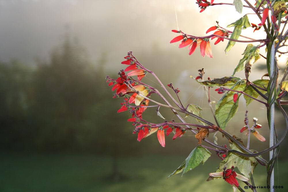 Herbstmorgen auf der Alb