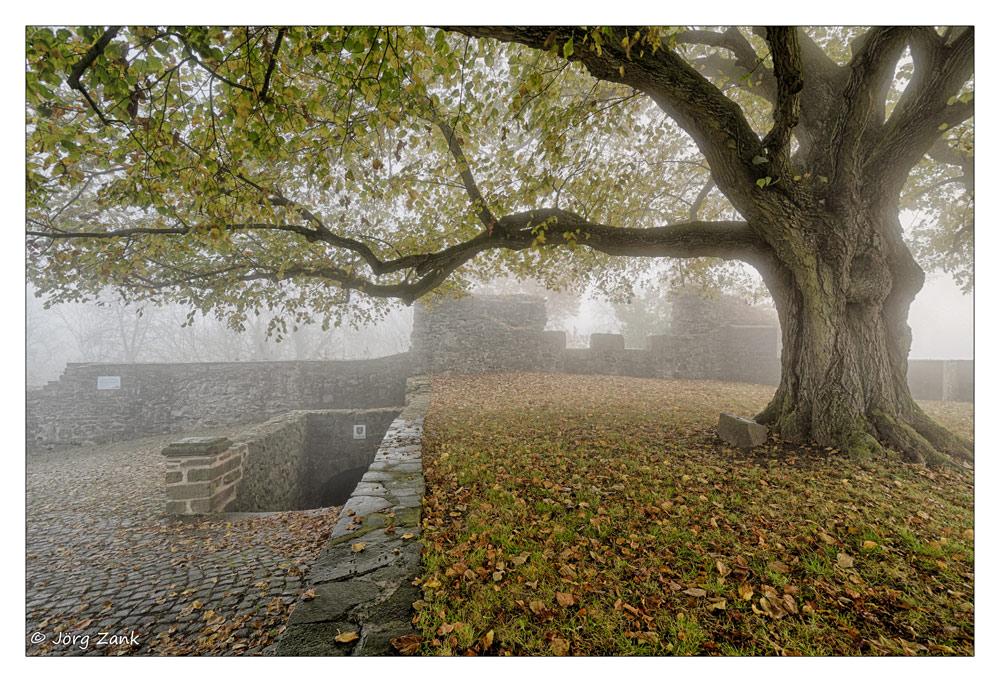 Herbstmorgen auf der Hohenburg