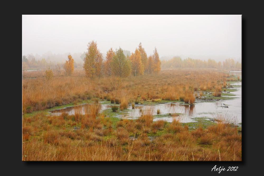 Herbstmorgen im Moor 1