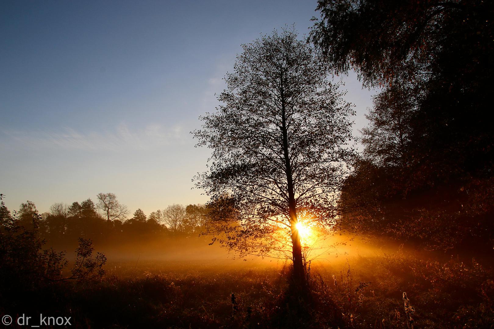 Herbstmorgen im Spreewald