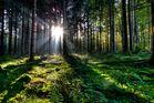 Herbstmorgen im Wald