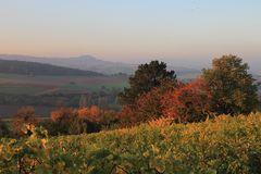 Herbstmorgen im Weinberg 2
