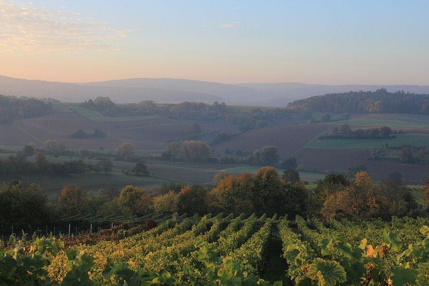 Herbstmorgen im Weinberg