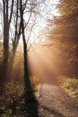 Herbstmorgen-in-Lippe