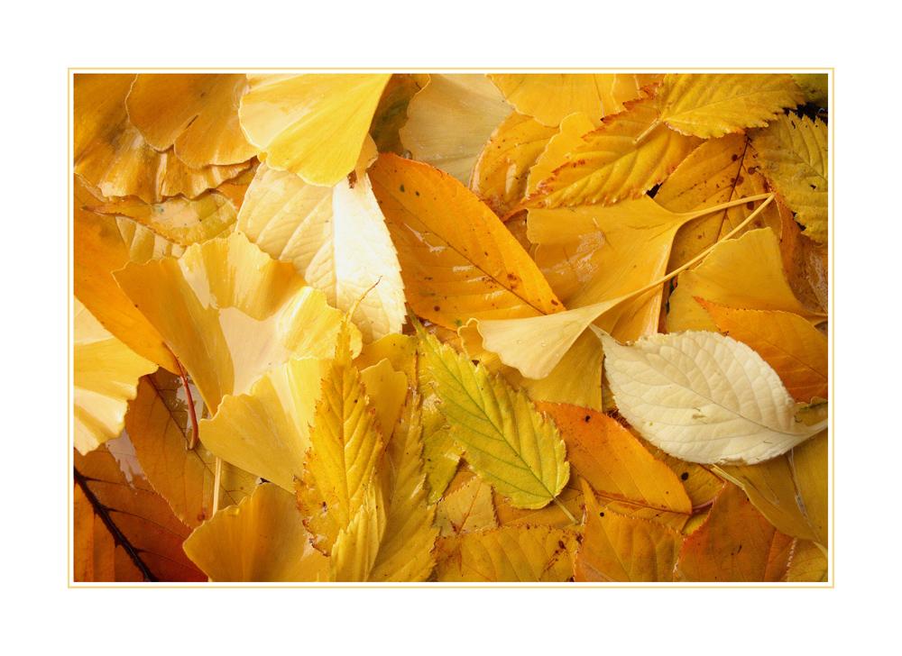 Herbstmosaik (2.1)