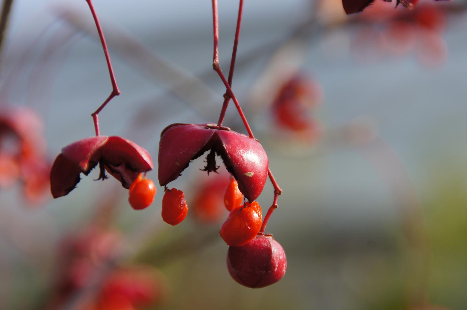 Herbstmützchen
