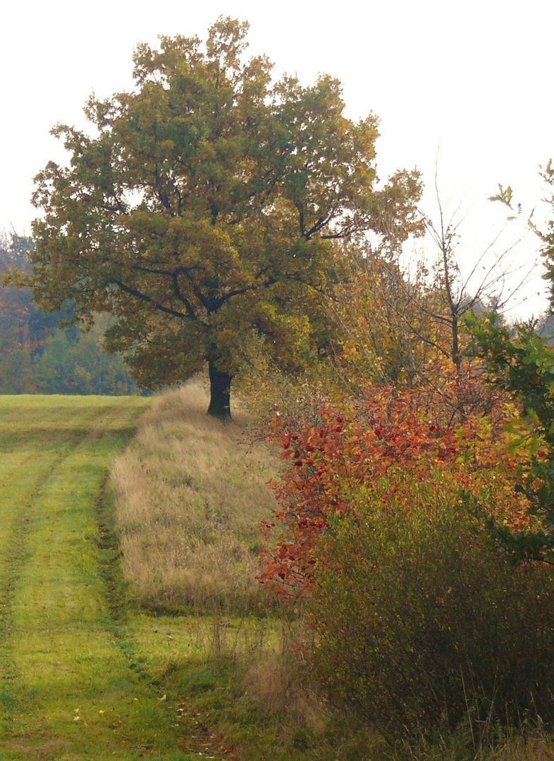 Herbstnachlese 3