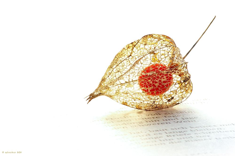 Herbstnachlese