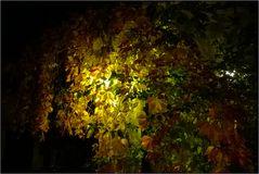Herbstnacht