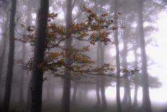Herbstnebel 2