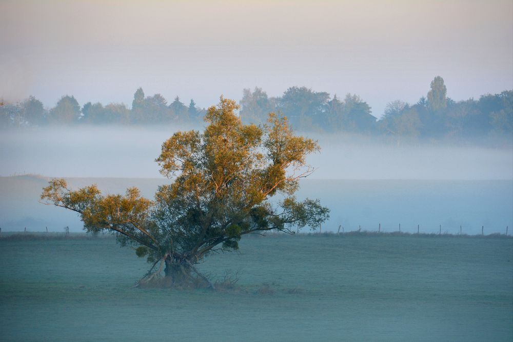 Herbstnebel...